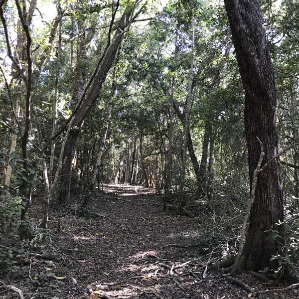 Forest walk at Tenikwa Nature Lodge