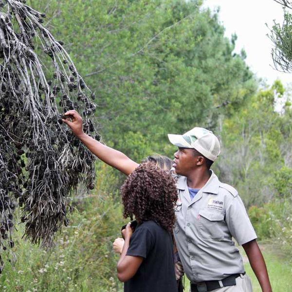 Fynbos walk at Tenikwa